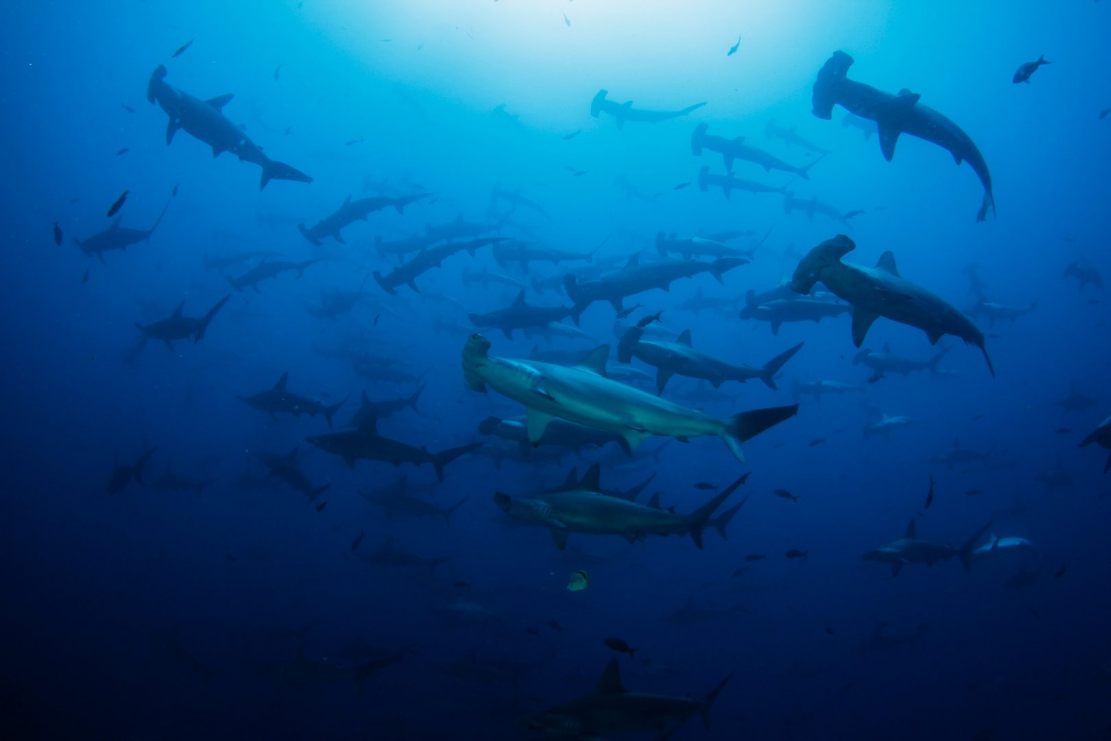Is Shark Finning Banned in Costa Rica?